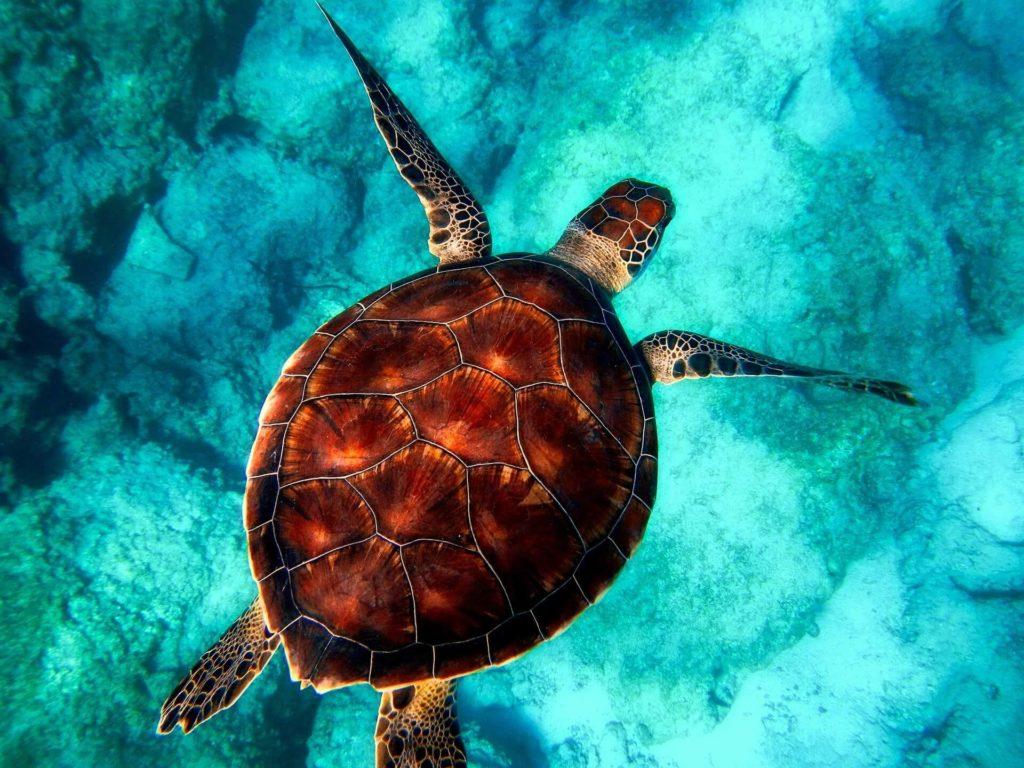 o que faz um biologo marinho
